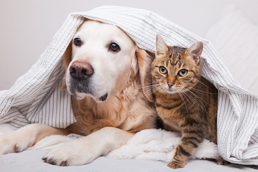 Best Home Security Systems for Pet Safety